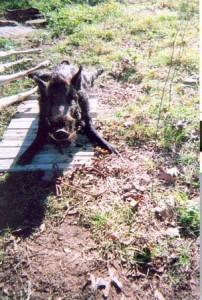 hunt-34